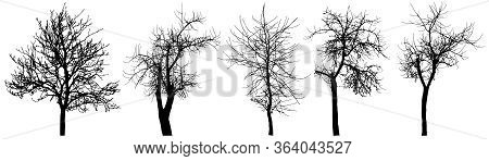 Bare Trees (chestnut Tree, Apple Tree, Cherry Tree), Set Of Silhouette. Vector Illustration
