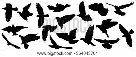 Set Of Silhouettes Of Flying Birds (pigeon, Crows) On White Background. Vector Illustration.