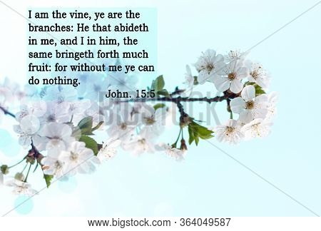 Bible Quote On Bloom Background. Inspiration Christian Text. I Am The Vine, Ye Are The Branches: He