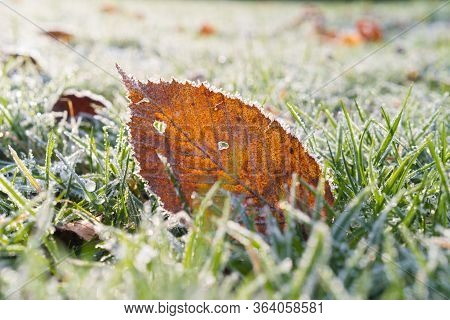 Frozen Beech Leaf In The Grass On A Winter Morning