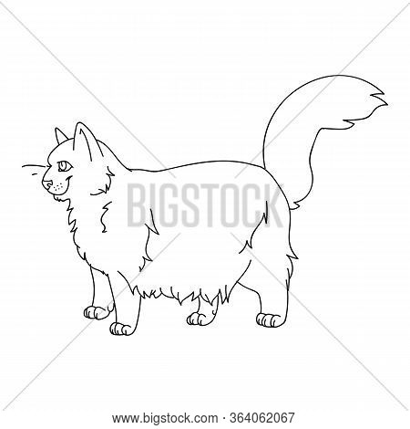 Cute Cartoon Ragdoll Cat Monochrome Lineart Vector Clipart. Pedigree Kitty Breed For Cat Lovers. Pur