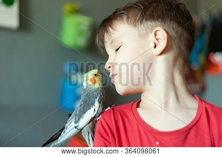 A Child With A Parrot On His Shoulder Kisses Him, The Child Takes Care Of The Pets