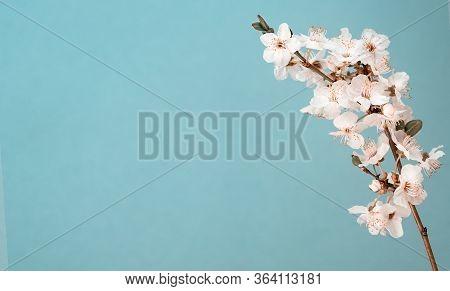 Tree Branch Apple Sakura Flowers Bloom Background