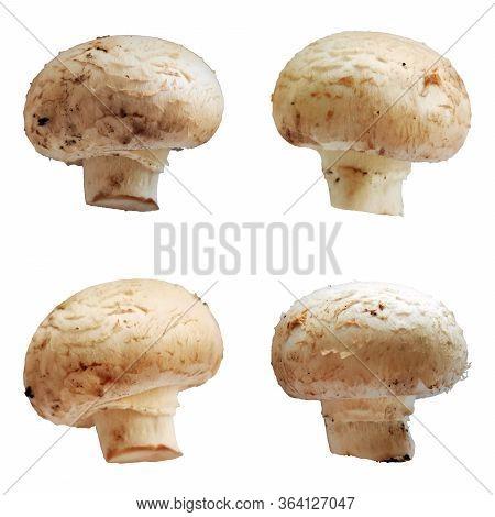 Champignons Mushrooms Isolated Set On White Background Macro Photo