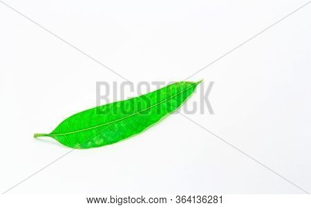 Leaves Green Mango. Isolated On White Background.