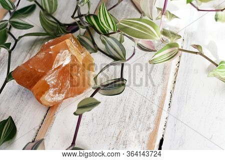 A Close Up Image Of A Beautiful Piece Of Honey Calcite With A Green Plant On A White Wooden Table To