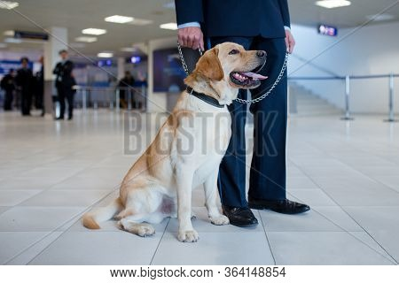 Image Of A Labrador Dog For Detecting Drugs At The Airport Standing Near The Customs Guard. Horizont