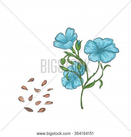 Flax Seeds And Blooming Plant Vector Illustration. Flax Seed Hand Drawn Botanical Elements.