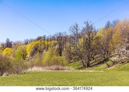 Beautiful Spring Landscape Of Public Park With Trees And Green Grass Lawn Under Blue Sky
