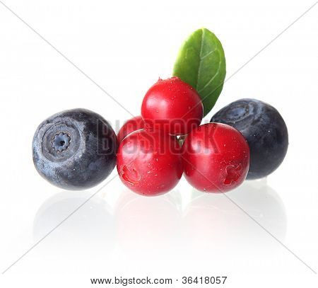 Cowberry and bilberry with leaves isolated.