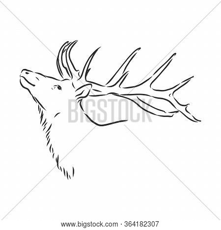 Deer Portrait. Hand Drawn Vector Illustration. Can Be Used Separately From Your Design. Portrait Of
