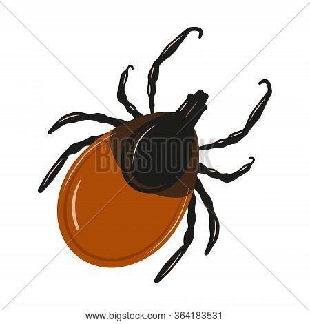 Mite Insect Parasites Ticks. Encephalitis Tick Warning.