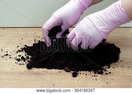 Woman Hands In Gloves Knead And Prepare The Soil For Transplanting Plants