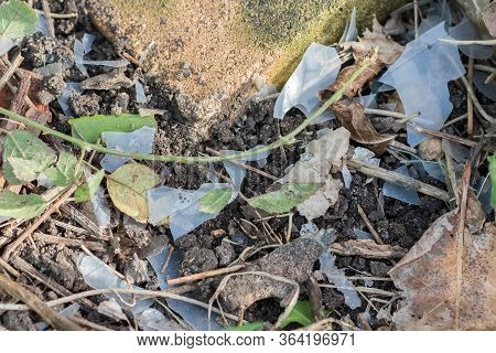 Plastic Pollution. Secondary Microplastics Formed As Plastic Bags Become Brittle And Disintegrate. G