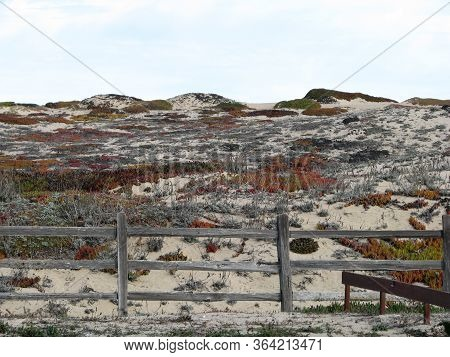 Fence On Sand Dune On Monterey Bay Beach California