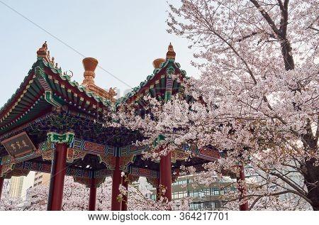 Ikutagawa River's Cherry Blossoms Park Located Next To The Jr Shin-kobe Railway Station In Kobe, Jap