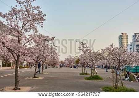 Ikutagawa River's Cherry Blossoms Park Next To The Jr Shin-kobe Railway Station In Kobe, Japan