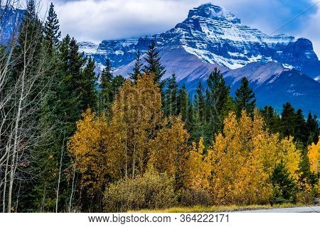 Fall Colours Abound Along The Icefields Parkway. Banff National Park, Alberta, Canada