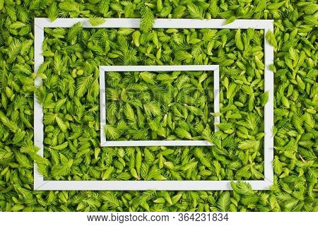 Fresh Green Pine Needles As A Background With The Frame