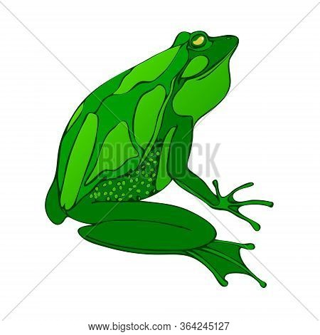 Bright Green Big Frog Drawing Vector. Isolated On White.