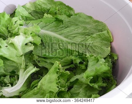 Lettuce Leaves In The Basin To Be Washed To Make A Salad,