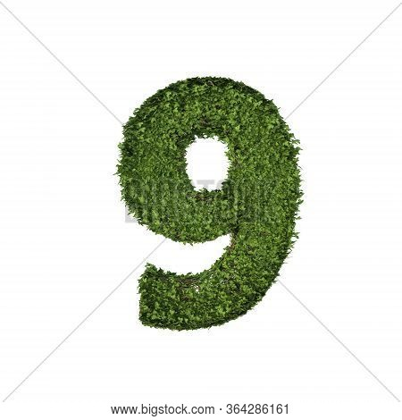 Ivy Plant With Leaves, Green Creeper Bush And Vines Forming Number Nine, 9, Alphabet Text Font Chara