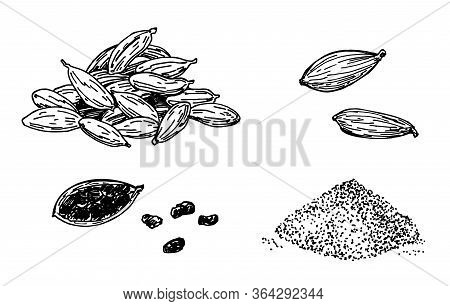 Cardamom Set. Hand Drawn Engraving, Ink, In Sketch Style. Ground Cardamom And Grains. Vector Illustr