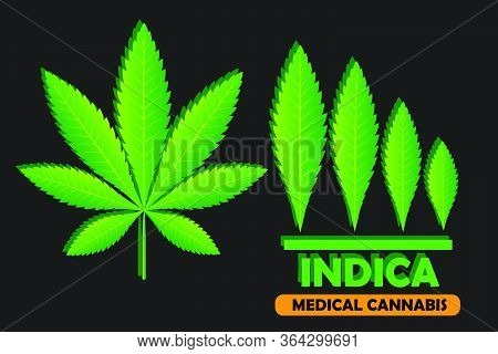 Green Leaf Of Cannabis Indica