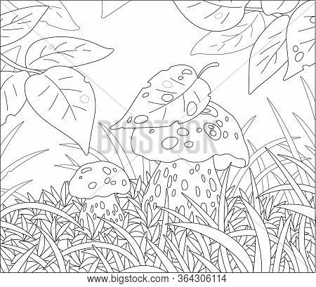 Two Thick Edible Mushrooms Hiding Under Leaves Among Grass On A Pretty Forest Glade, Black And White