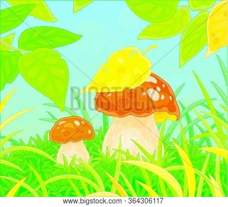 Two Thick Edible Mushrooms Hiding Under Leaves Among Green Grass On A Pretty Forest Glade, Vector Ca