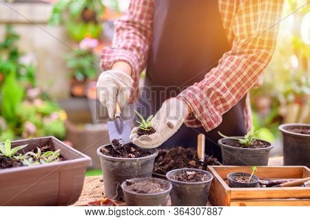 Gardener Planting The Tree And Growth Up. Home Gardening Nature And Environment Hobby. Relax And Rec