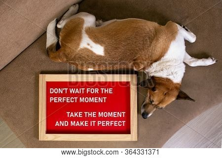 Dog Lying On The Sofa With The Poster In The Frame With A Message Don't Wait For The Perfect Moment,