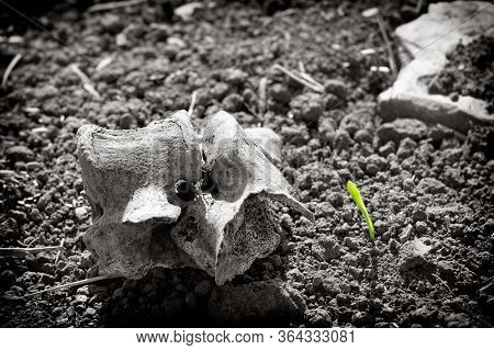 New Life - Nature Reborn. Natural Environment Encompasses All Living And Non-living Things Occurring