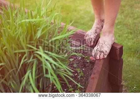 Barefoot woman with muddy feet in the garden