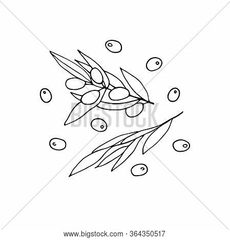 Set Black And White Olives. Outline Olive Branches Isolated On White Background. Hand-drawn Berries
