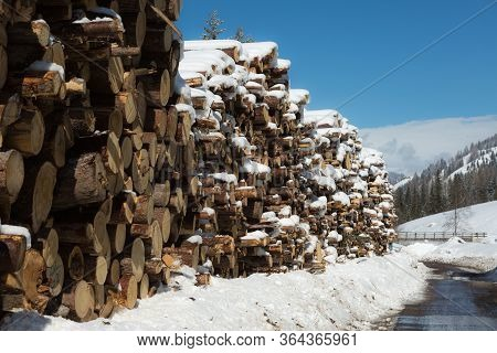 Woodpile With Snow: Cross Section Of Tree Trunks Background.