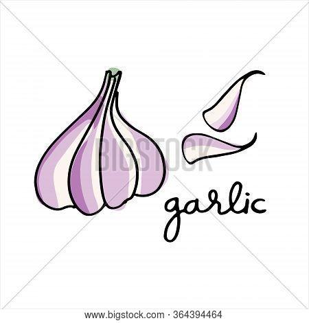 Garlic Bulb And Cloves. Colorful Vector Illustration With Hand Lettering. Perfect For Cteaching Aid,