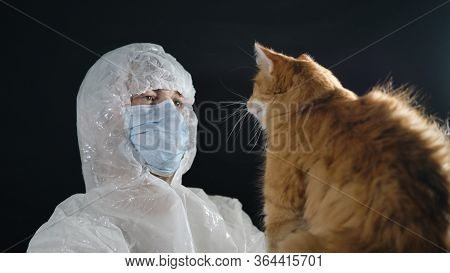 Ginger Cat Paw Vet In The Face. Male Virologist In A Protective Suit And Medical Mask Holds A Wild C
