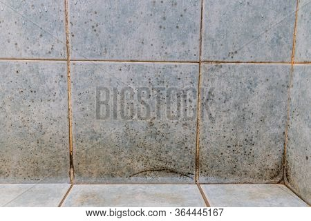 Mildew, Dirty Unhygienic Mold Growing On Bathroom Wall Tile