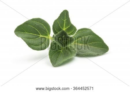 Raw Organic Oregano Leaf Or Marjoram On White Isolated Background. Fresh And Dry Oregano Is Ingredie