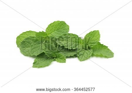 Organic Raw Mint Leaves Or Menthol On White Isolated Background With Clipping Path. Fresh Mint Or Pe
