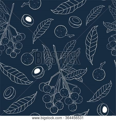 Outline Seamless Pattern With Longan Fruit. Branch, Leaves And Half-vault Of Longan Isolated On Dark