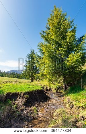Beautiful Mountain Landscape In Springtime. Trees On The Grassy Meadow. Small Brook In The Valley. F