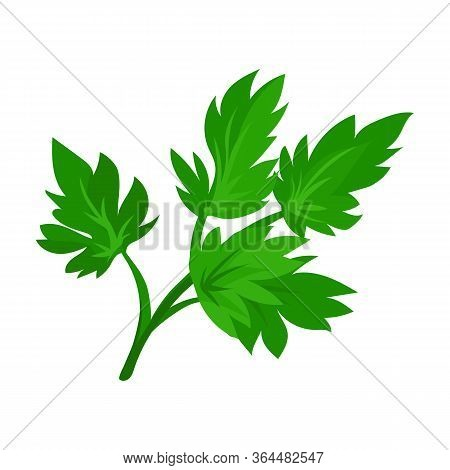Leaf Of Celery Vector Icon.cartoon Vector Icon Isolated On White Background Leaf Of Celery.