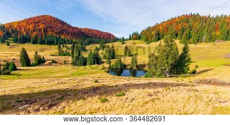 Autumn Panoramic Landscape In Mountains. Fir Trees Around The Pond On The Meadow In Yellowish Weathe