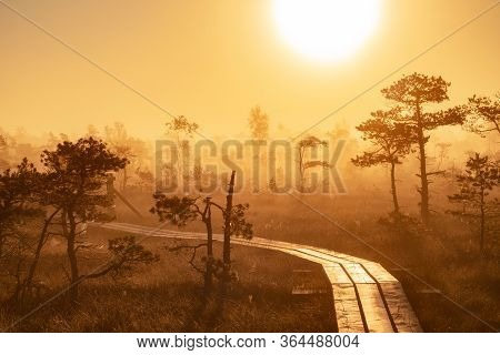 Misty Sunrise In The Swamps Above The Forest