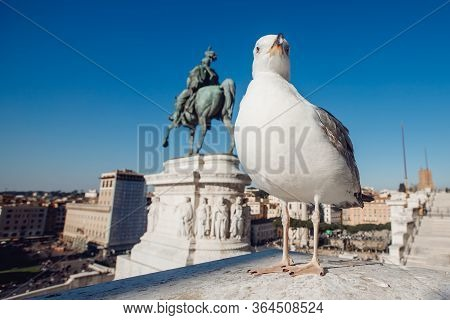 Seagull On Monument Of Vittorio Emmanuel On Venice Square In Rome Italy, Blue Sky