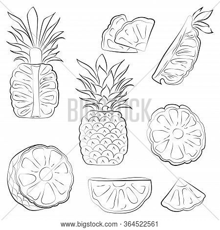 Black And White Pineapple Isolated On White Background. Vector Illustration. Decorative Retro Style