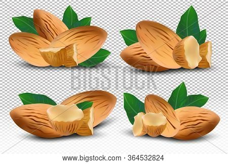 3d Realistic Almond. Nuts Almonds With Leaves On Transparent Background. Almond Close Up. Half , Pie