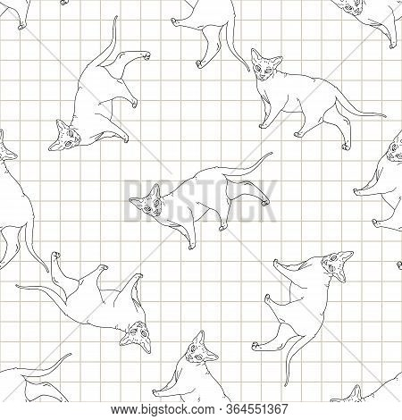 Cute Cartoon Monochrome Sphynx Cat Seamless Vector Pattern. Pedigree Exotic Kitty Lineart Breed Dome